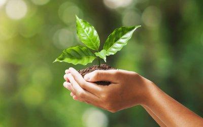 Corso di laurea magistrale in Scienze dell'Economia, indirizzo Green Economy e Sostenibilità